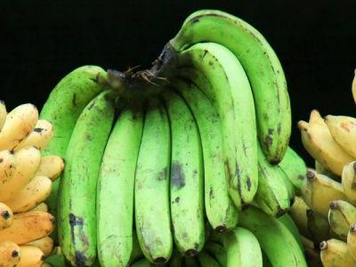 Disease Putting Bananas on Brink of Extinction. Gene Editing Could Save Them
