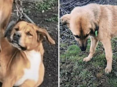 Thieves Hung Innocent Dog's Foot From A Tree And Abandoned Him