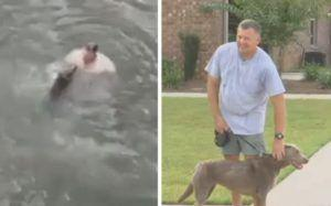 Man Leaps Off Bridge To Save His Dog From Drowning