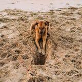 What to Do If Your Dog Can't Stop Digging, According to a Dog Behavior Expert
