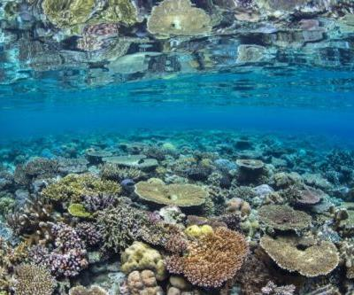 2018 - The Year for Coral Reefs