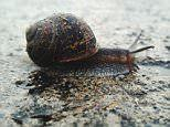 How SNAILS could be the answer to chronic pain