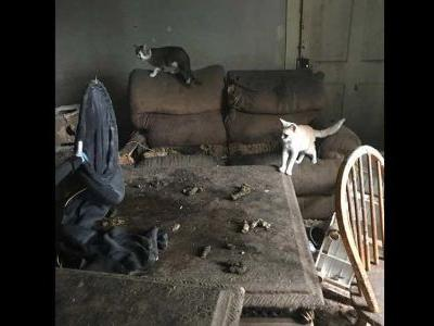 Nearly 50 cats, 12 dogs, 6 puppies living in poor conditions rescued from house fire, shelter says