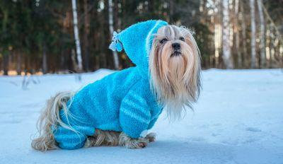Dog Sweaters During Winter? Do Dogs Really Need Them?