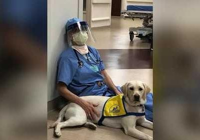 'It's been the brightest part of our day': Service dog in training brings comfort to ER doctors on the front lines