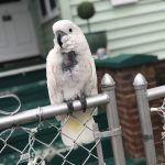Pets Exhibit Behavioral Issues with Humans Home in Pandemic