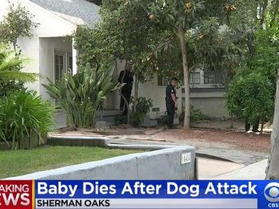 2018 Dog Bite Fatality: Baby Killed by Family Dog While Under Her Grandmother's Care