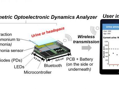 A Handheld, Colorimetric Optoelectronic Dynamics Analyzer for Measuring Total Ammonia of Biological Samples