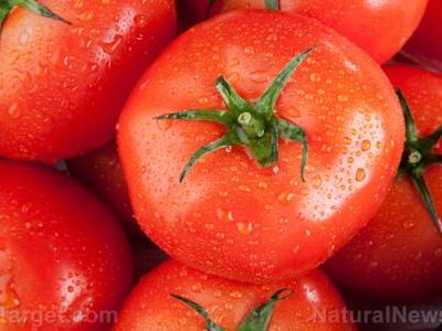 Tomato wastes show potential value as animal feed as they still possess a high nutritional content