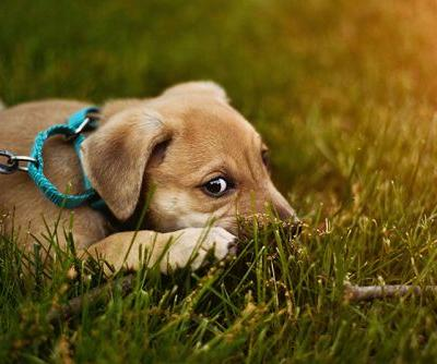 Adopted A Pet? Here Are Five Ways You Can Boost Your Furry Friend's Confidence