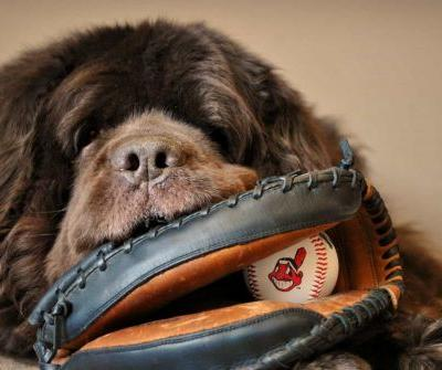 Dog Friendly Baseball Games - 2019 Schedule
