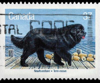 8 Great Facts About the Newfoundland Dog
