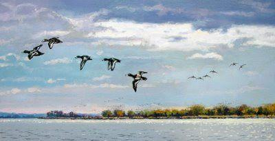 Near Finished.Bluebills on the Bay.oil painting