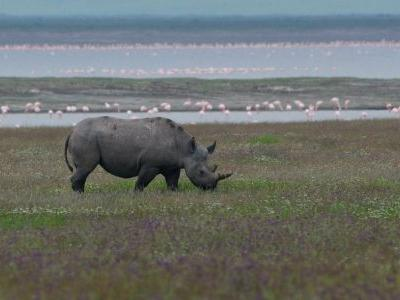 Tanzania: Searching for the Mysterious Beasts of Ngorongoro
