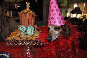 Woman Honors Her Mother's Final Wish With A 20th Birthday Party For Her Beloved Dog