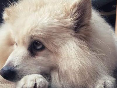 Scientific Research Tells Us What Dogs Are Thinking