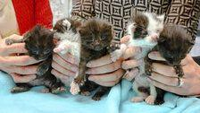 Kitten Stowaways Survive 400 Miles Inside Steel Column