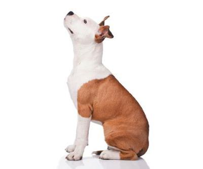 Teach Your Dog to Respond to Cues - Successfully