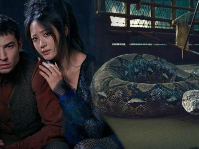 Fantastic Beasts 2: Voldemort Snake Theory Officially Confirmed