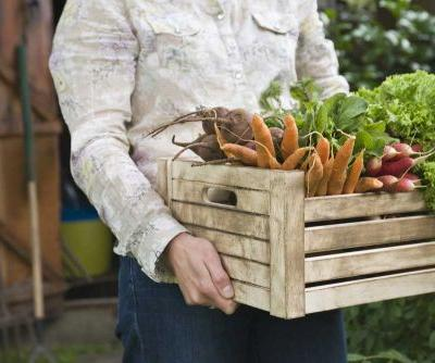 Can You Trust that Organic Food is Actually Organic?