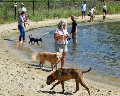 Annapolis's Pet-Friendly Eastport Neighborhood