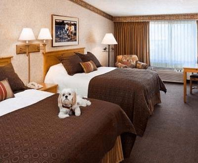Ask These Questions BEFORE Booking A Pet Friendly Hotel