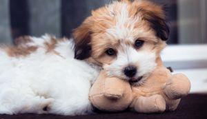 The 10 Most Cuddly Dog Breeds