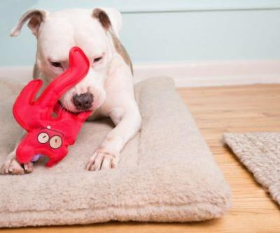 Which Dog Toys Are Safe?
