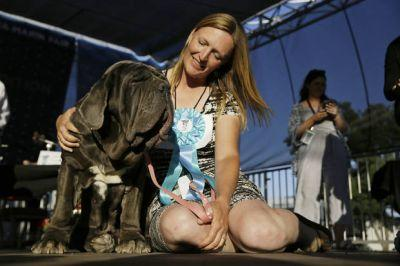 The Latest: Mastiff named Martha wins world's ugliest dog