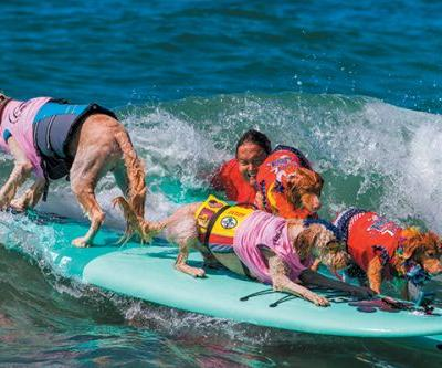 Surfing Dogs - How to Teach Your Dog to Surf
