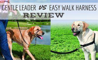 Gentle Leader vs Easy Walk Harness: Which Should You Pick?