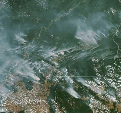 The Amazon Rainforest Is Ablaze - Here's How You Can Help