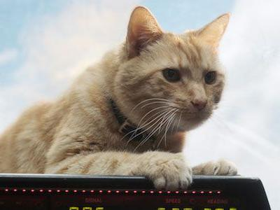 Will Goose The Cat Be In Avengers: Endgame? Captain Marvel Hero Is Everywhere Else