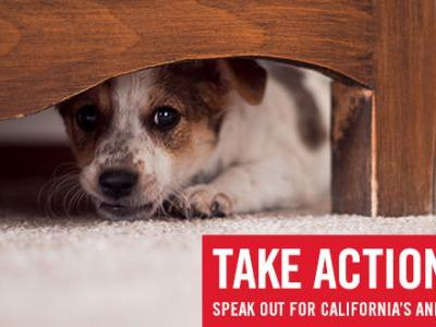 End the Cycle of Abuse - Speak out in Support of the Animal Welfare and Violence Intervention Act