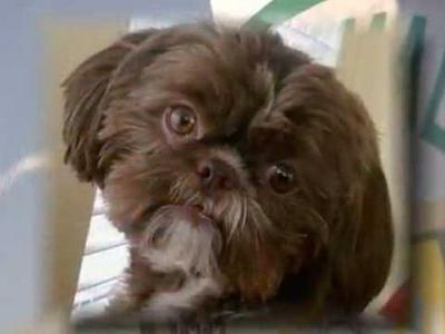 Dog euthanized, buried with its deceased owner 'in accordance with. will'