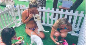 Bali Resort Elevates Relaxation With Puppy Therapy For Guests