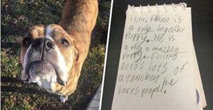 Dog Surrendered With A Heartbreaking Letter From A Child Who Will Desperately Miss Him