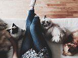 Being a cat lady doesn't show poor mental health says UCL