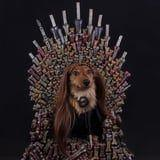 14 Dogs Who Are More Obsessed With Game of Thrones Than You