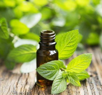 The many uses of peppermint oil