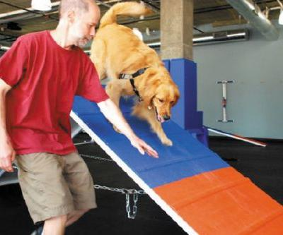 Zoom Room Is an Indoor Gym - For Dogs