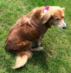 IBS in Dogs: Causes, Symptoms and Treatment