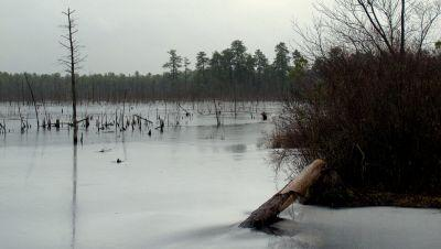 NJ Regulators To Vote On Gas Pipeline Through Protected Pinelands Reserve