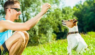 3 Crucial Behavioral Tips For The First-Time Dog Owners
