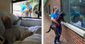 Shelter Pups Put Smiles On The Faces Of Lonely Seniors