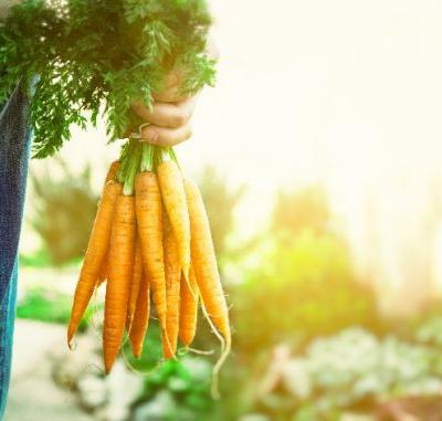 7 tips for growing sweet carrots