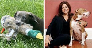 Rachael Ray Rescues Another Pit Bull