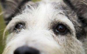 If Your Dog Is Under Stress, Consider Adding A Probiotic To Their Diet