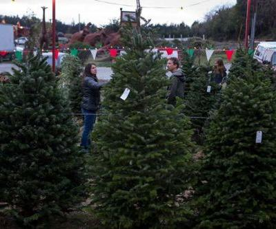 What's in the box? Amazon to ship live Christmas trees this holiday season