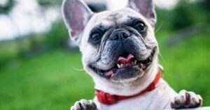 The Most Popular Small Dog Breeds In The UK